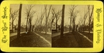 Broadway, Bangor, ca. 1881 by Broadway News Company